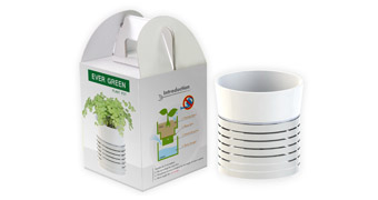 Ever Green Plant Pot